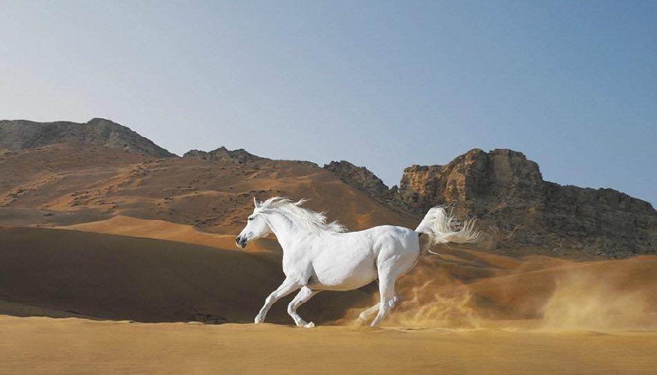"""Atlar nereden geliyorlar? Eski zamanlarda atlar, her ne kadar bir yerden bir yere ulaşım amacıyla kullanılıyorduysalar da artık taşımacılık yapan atlara ya köylerde ya da turistik mekanlarda rastlıyoruz.  Genellikle evcilleşmiş olan bu dört bacaklı dostlarımızın bazı akrabaları hala (özellikle Amerika'da) vahşi doğada yaşamlarını sürdürmekteler. Ayrıca, köylerde """"Yılkı atı"""" olarak bilinen, yaşlanmış, sakatlanmış, artık iş görmeyecek atlar da doğaya salınmakta ve zamanla üreyerek vahşi yaşamın bir parçası olmaktalar.   Bunun dışındaki durumlarda atlar, daha çok sportif amaçlarla beslenmekteler. Hipodrom yarışçılığı, cirit, engel atlama ve dresaj gibi pek çok farklı dalda biz binicilere hizmet vermekte ve yardım etmekteler."""