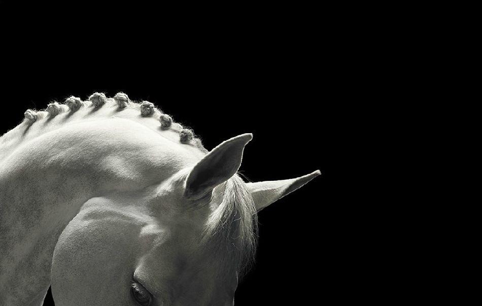 Atların özellikleri nelerdir? Atlar, genellikle asil olmalarıyla tanınsalar da pek çok insanın bilmediği bir diğer özellikleri de hassas canlılar olmalarıdır. Evet, yakınına gittiğinizde cüssesi sebebiyle ürktüğünüz bu iri ve heybetli canlı dış görünüşünün tam aksi bir yapıya sahip ve son derece hassastır. Düzenli tüy ve deri bakımına, veteriner kontrolüne, tırnak bakımına, antremana ve ilgiye ihtiyaç duyarlar. Atlar, tıpkı köpekler ve kediler gibi, birçok farklı cinse ayrılmaktadırlar. Genel kanının aksine midilliler (ponyler) bir at cinsi değildirler. Atla midilliyi (pony) birbirinden ayıran fark, yaşları ya da geldikleri kökenleri değil, boylarıdır.