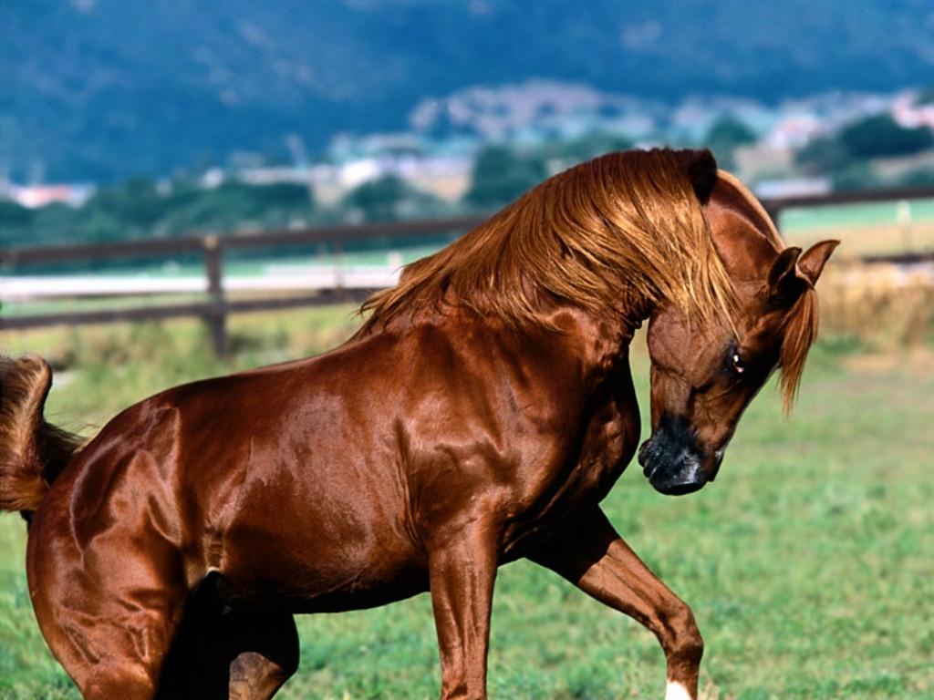 At binmek hakkında bilmeniz gerekenler! Yurt dışında biniciliğin Türkiye'dekinden daha gelişmiş olduğu bir gerçektir. Bunun nedeni biraz sosyoekonomik, biraz da tesislerin azlığı olarak gösterilebilir.