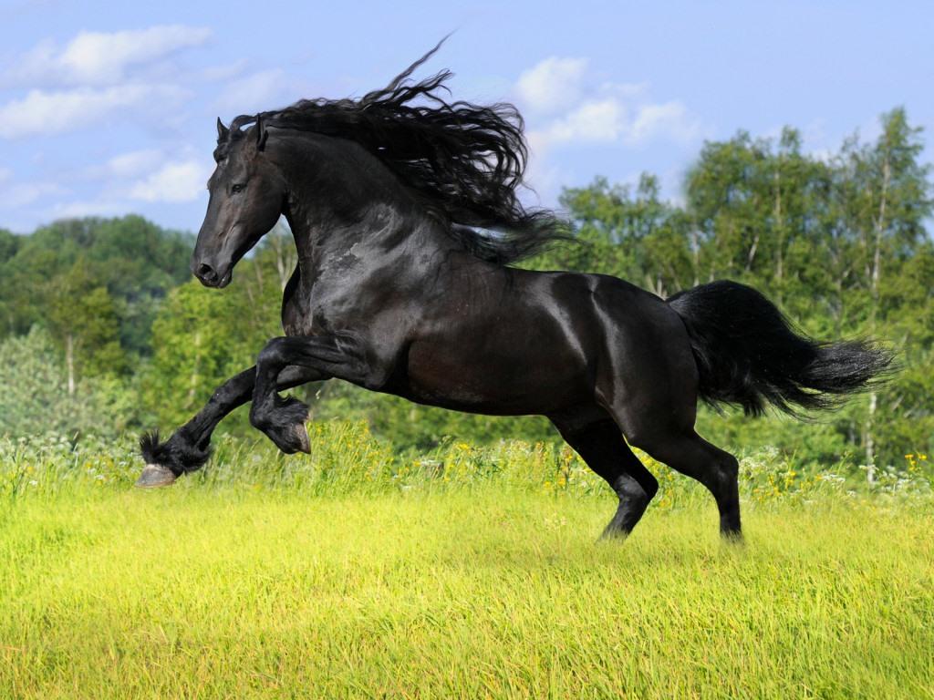 At binmek hakkında bilmeniz gerekenler! At binmek, eğlenceli olduğu kadar efor sarf edilmesi gereken, öğrenmesi uzun yıllar alan ciddi bir spordur ve harcadığınız her ana değer. Sonuçta binicilik, bir başka canlıyla bir bütün halinde yapılan yegane spordur ve bunun keyfi (özellikle de sıkı bir hayvanseverseniz) dünyada başka hiçbir şeyle boy ölçüşemez.