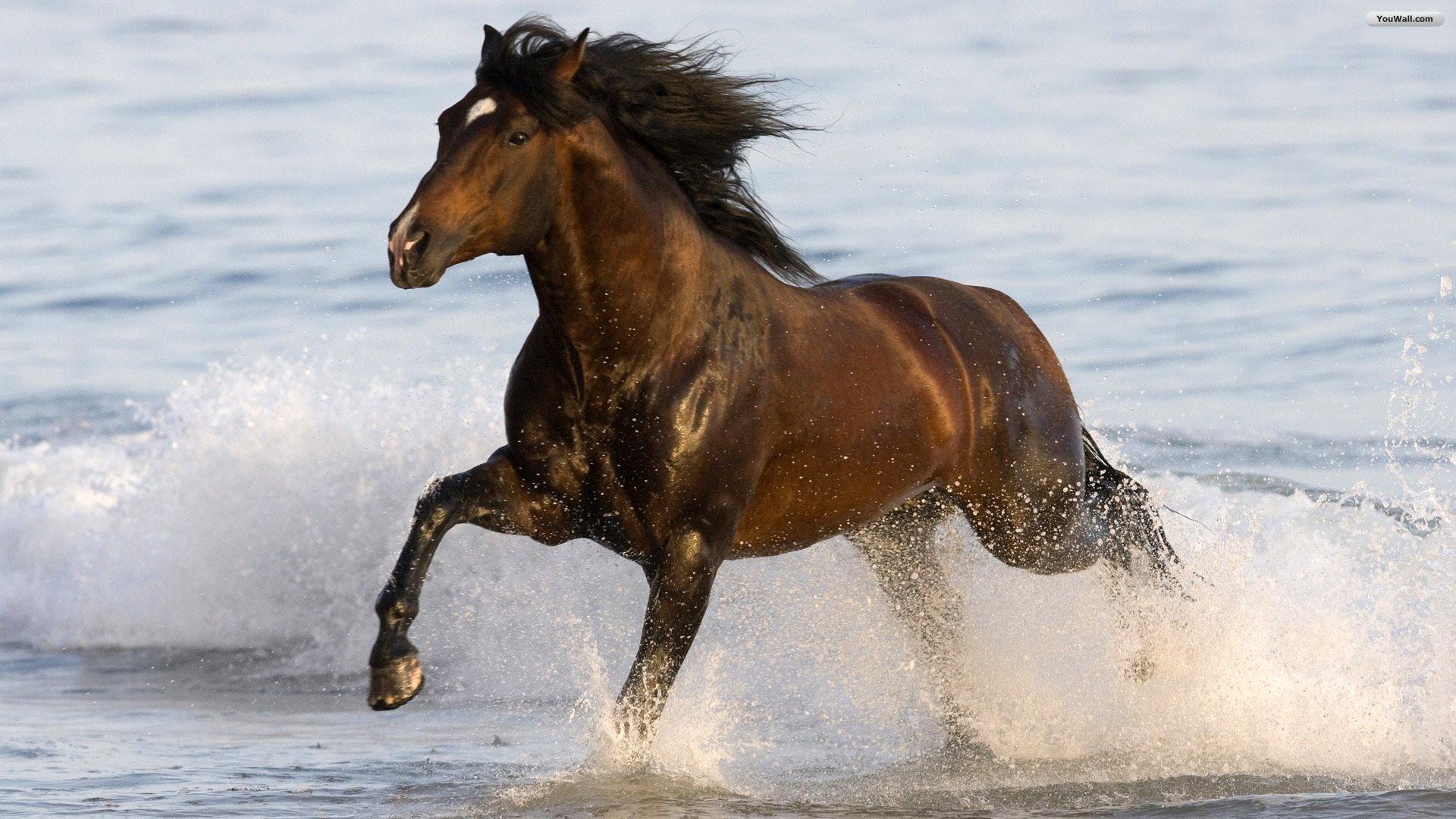 Atlar; Dosttur,sevgi dolu, bazen biraz ürkek, ot obur, kocaman kalpli ve insanlarla bağ kurmaya düşkün canlılardır''.