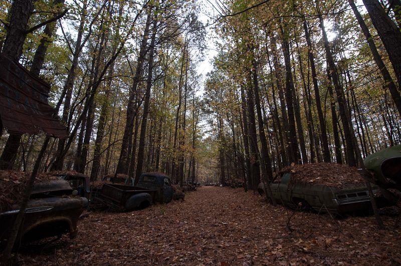Ormana gömülen arabalar