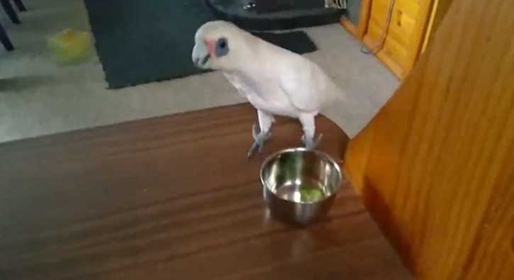 Brokoli sevmeyen papağanın isyanı