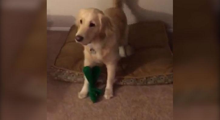 En sevdiği oyuncağın kılığına giren adamı gören köpeğin mutluluğu